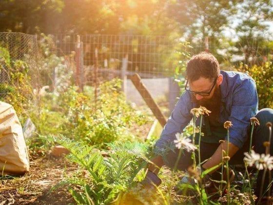 Ein Gaertner ist im Garten bei der Arbeit