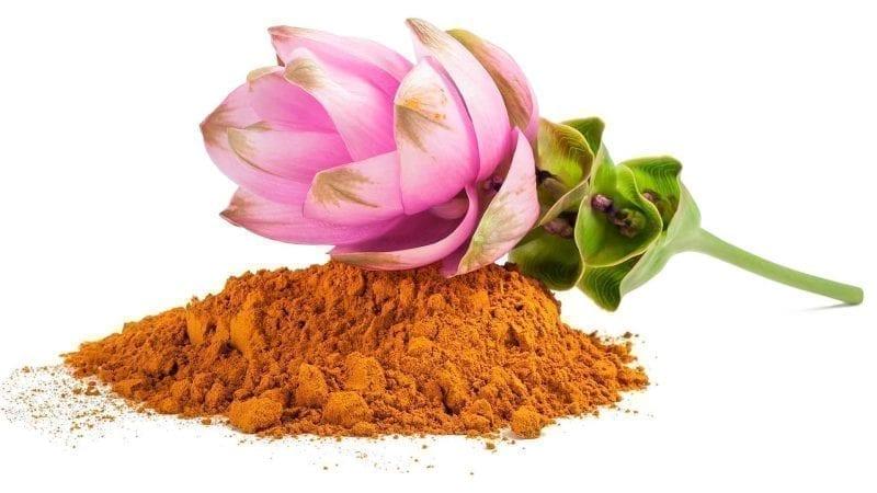 Die rosa Blüte der Kurkuma-Pflanze und Kurkuma-Pulver