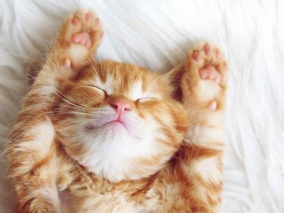 Jungkatze im Tiefschlaf