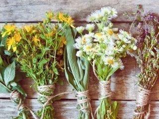 mehrere Kräuter und Blumen in Bündeln