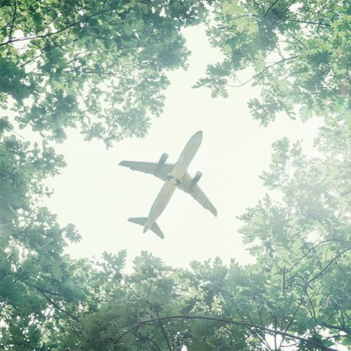 Durch einen Baumwald hindurch sieht man gegen Himmel ein Flugzeug
